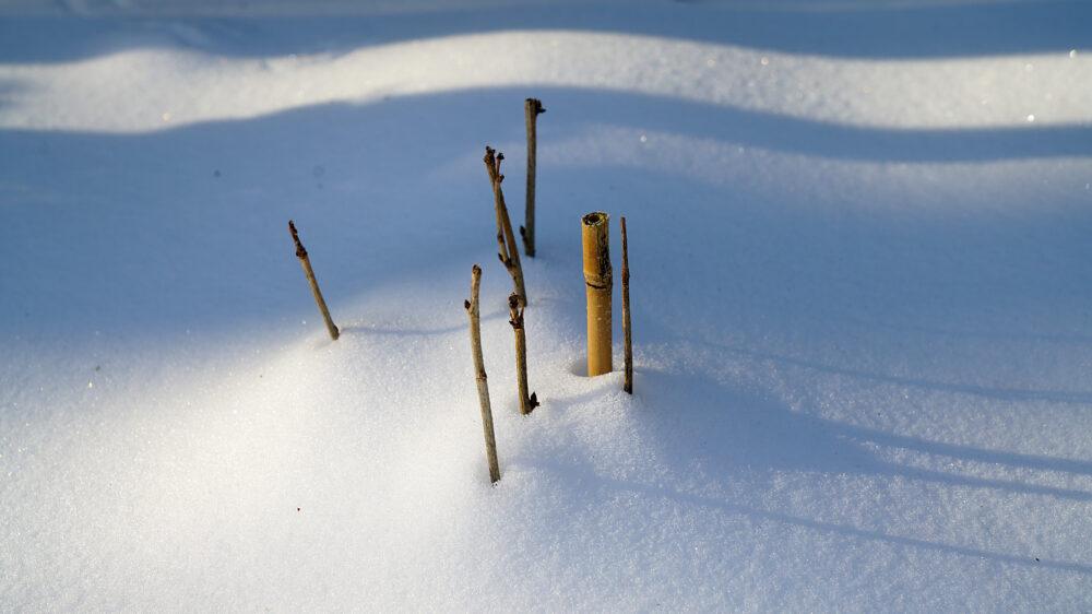 Zweigenden über Schneedecke