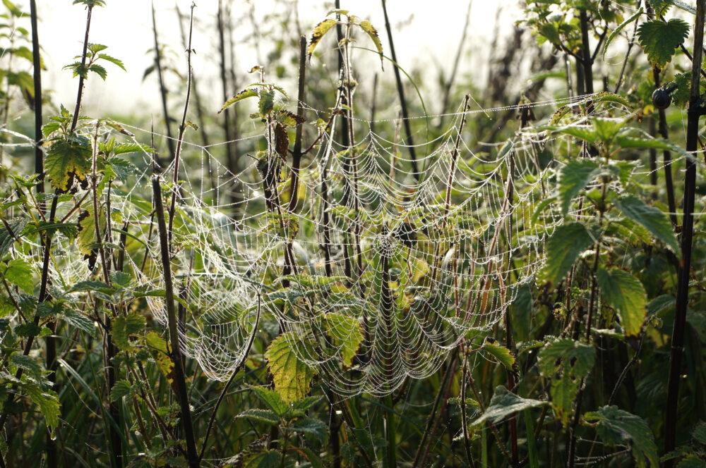 Spinnennetz 1