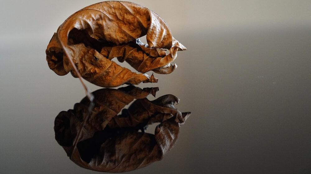 Herbstblatt, braun