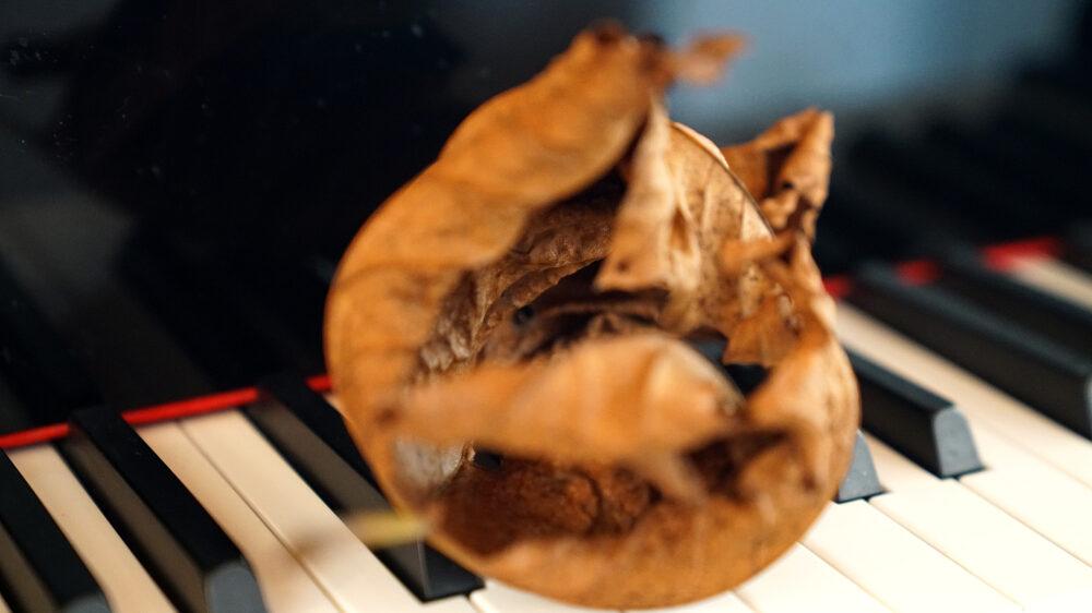 braunes Herbstlaub auf Tastatur