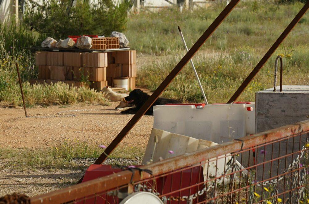 Matera, Kompostierhalle, Wachhunde