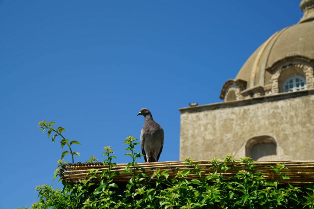 Ischia Aragoner Burg Taube auf Cafe-Dach