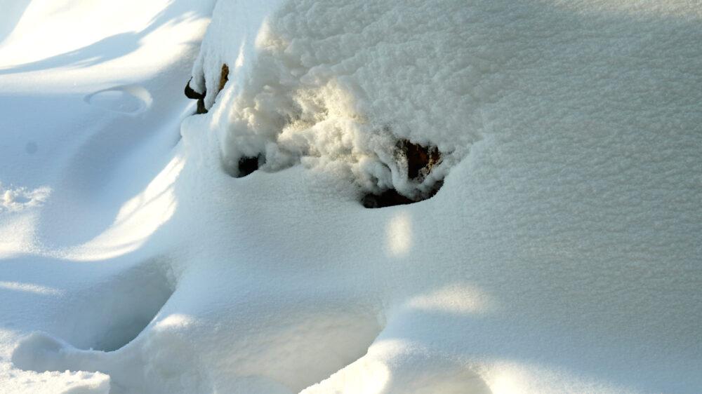 Augen im Schnee