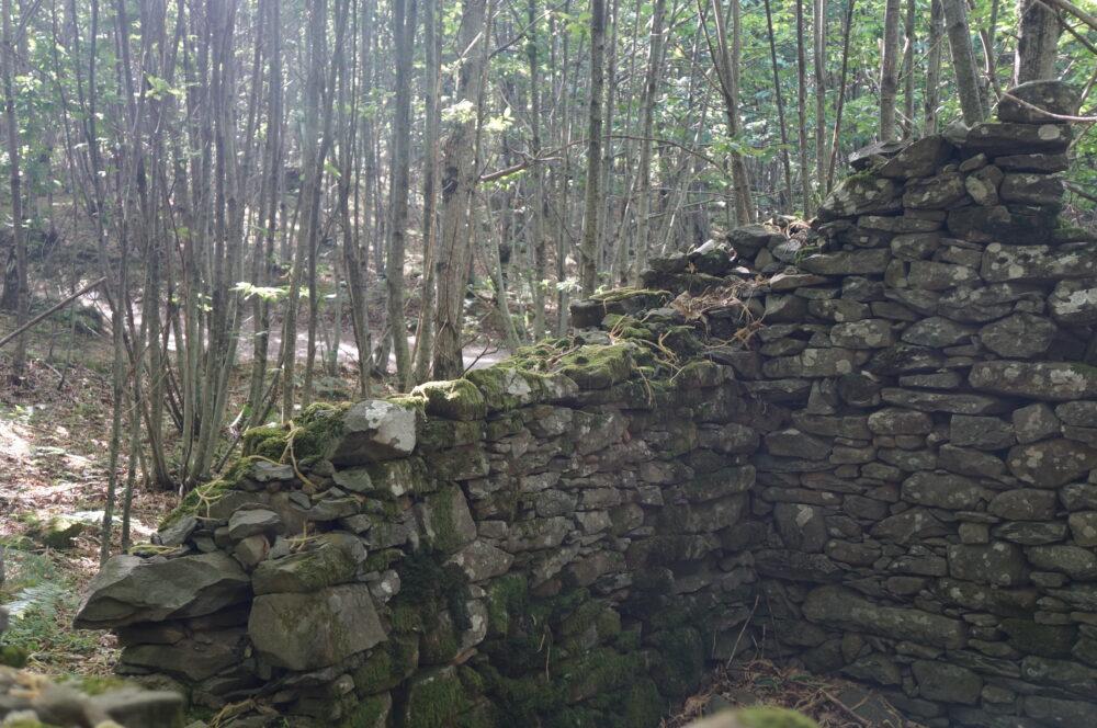 Reste einer Mauer im Wald