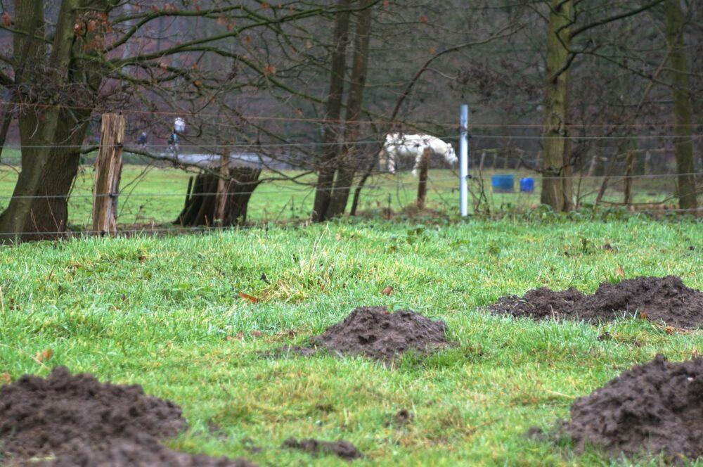 Maulwurfshügel, Hintergrund weißes Pferd