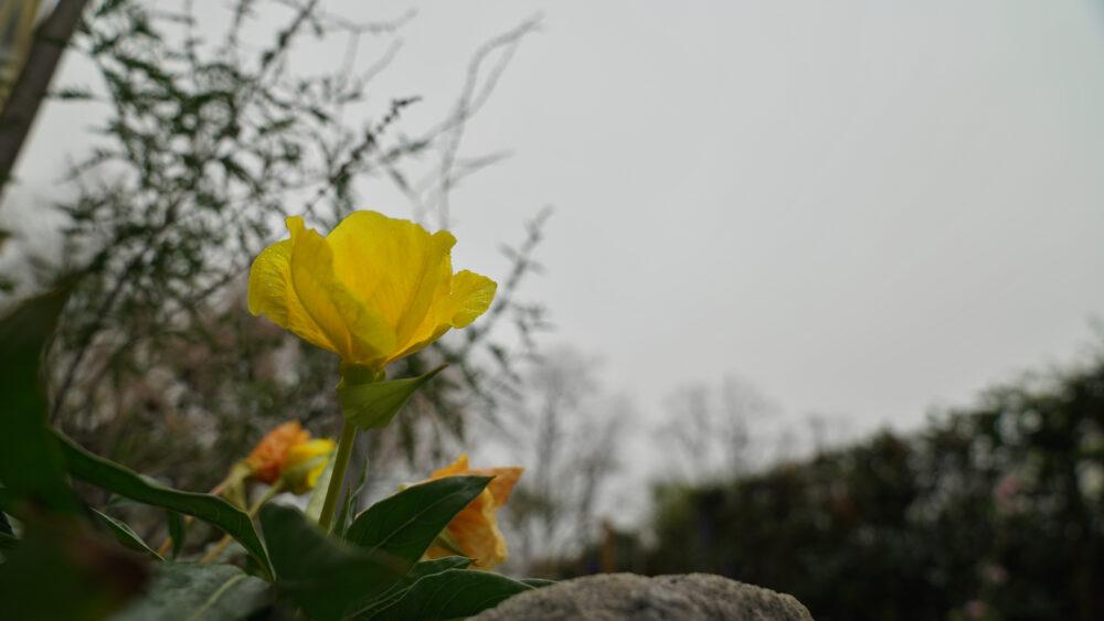Blüte im November