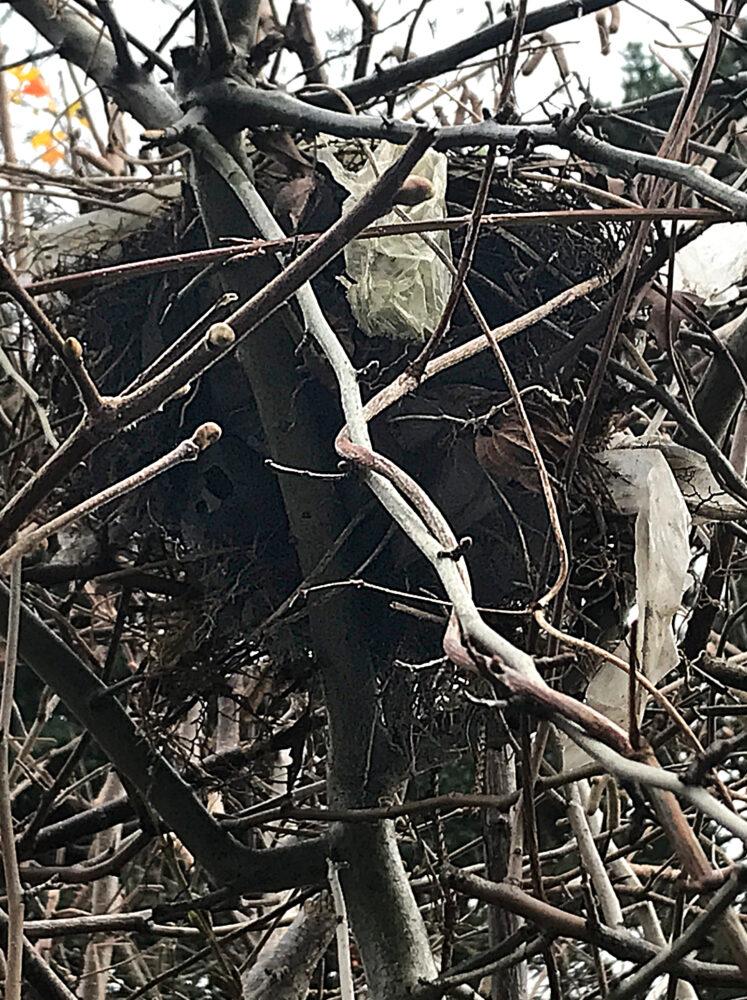 Vogelnest mit Plastikstreifen