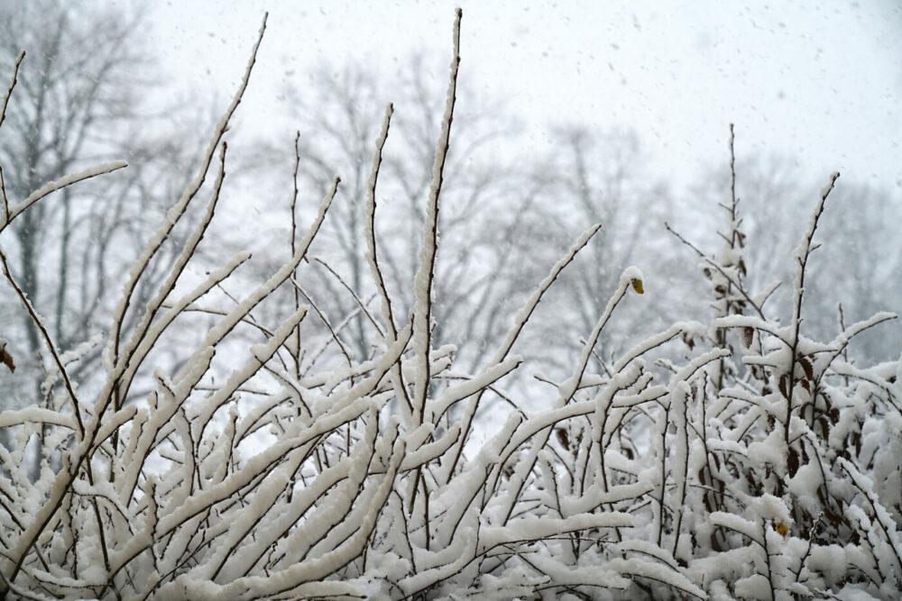 Schnee auf Zweigen