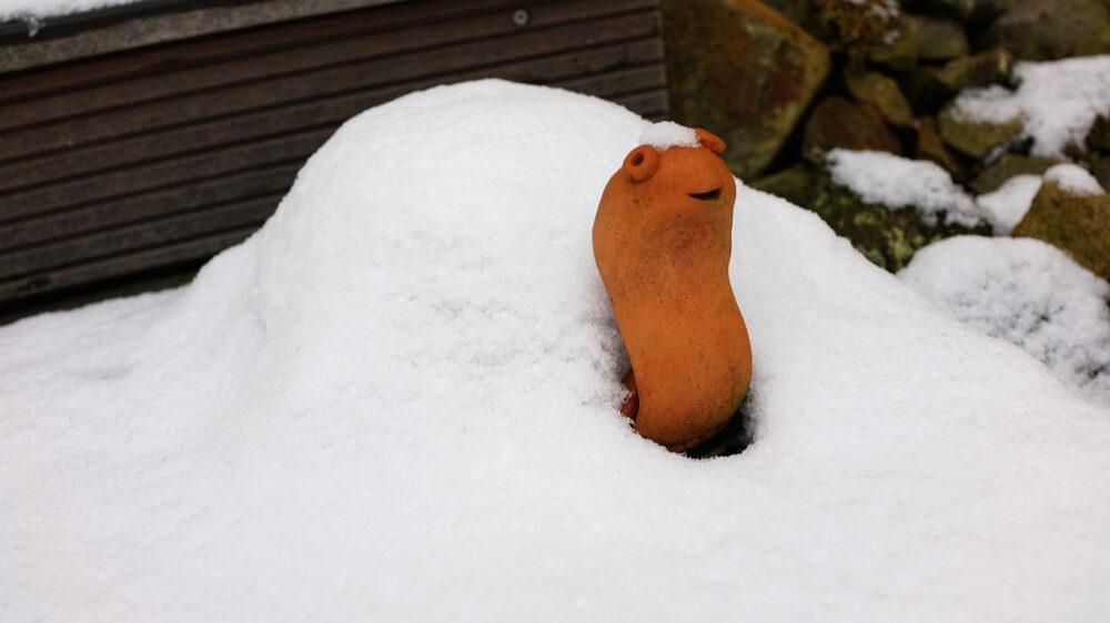 Tonschildkröte im Schnee