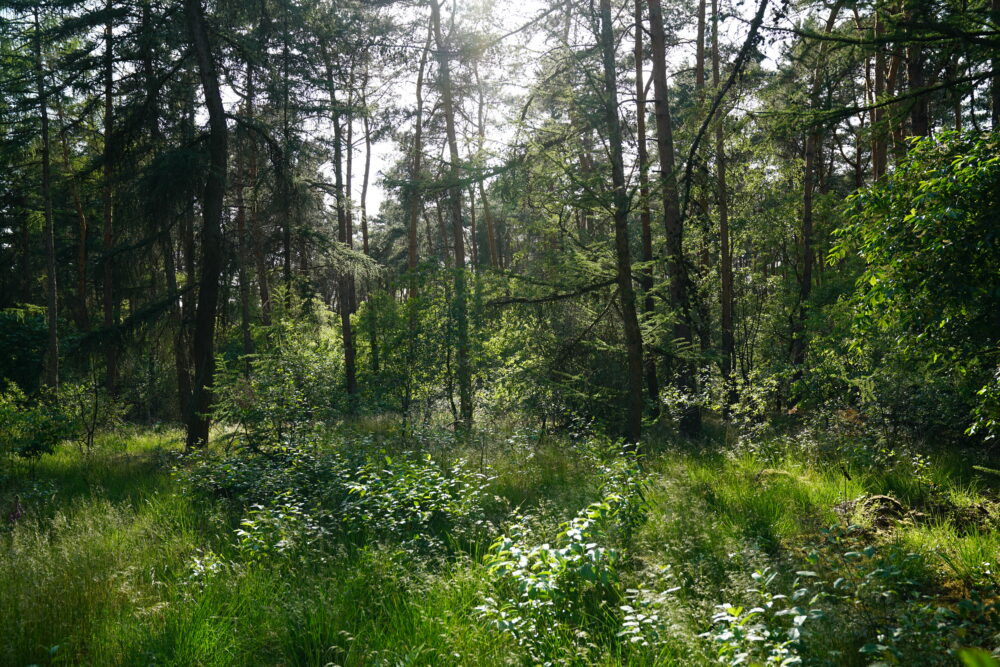 Wald am Silbersee