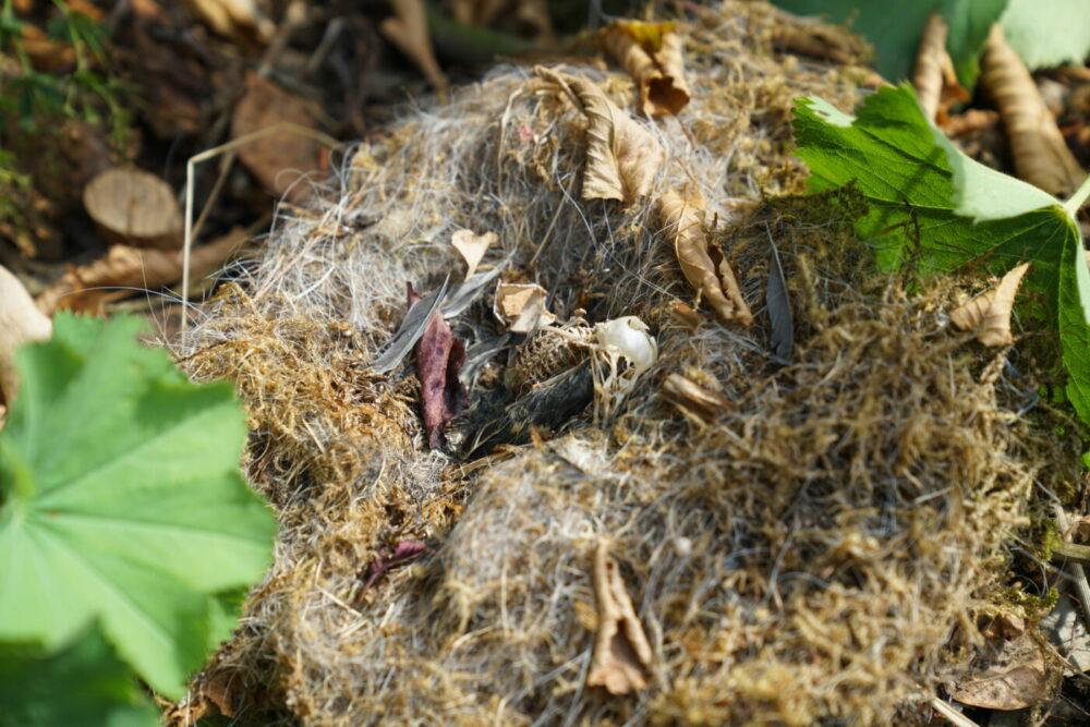 Vogelsskelett im Nest