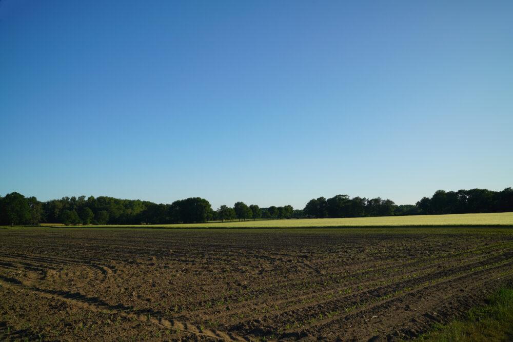 Landschaft im Westmünsterland