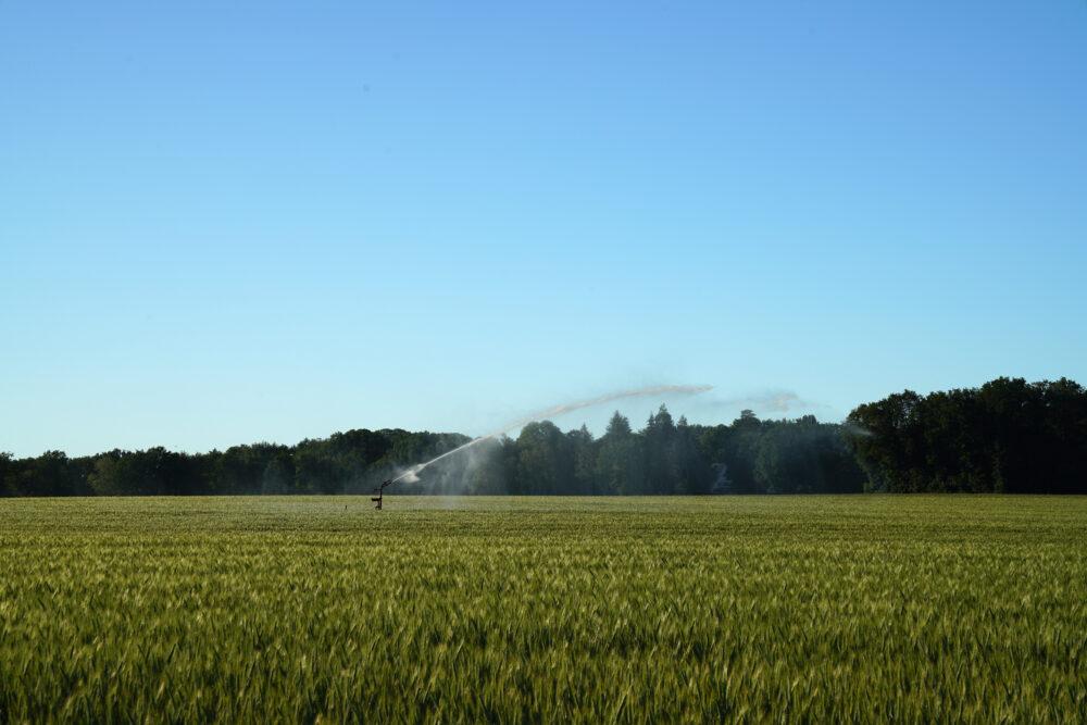 Westmünsterland, Wassersprenger auf Kornfeld