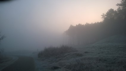 Dünen und Wald in Bergen, Morgennebel